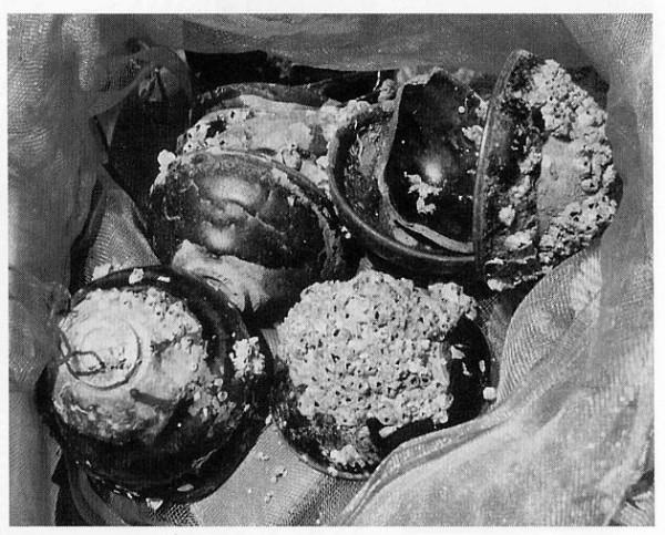 図6. 白礁1号遺跡出土の黒釉天目碗(小川光彦撮影)