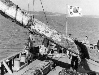 新安沈船の竜骨引き揚げ全景