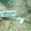 前方湾海底遺跡